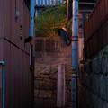 Photos: 曲がり角の街灯