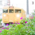 Photos: 花と電車