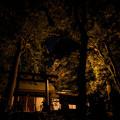 Photos: 鎮守の森