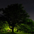 Photos: 大樹