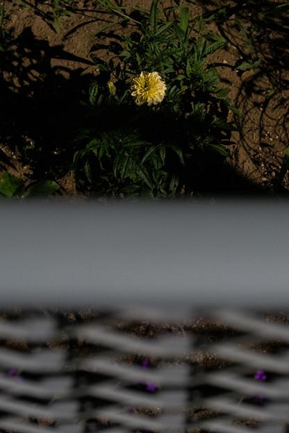 Photos: 花とフェンス