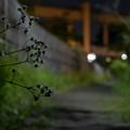 Photos: 道端の花