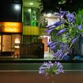 Photos: アガナントカという花