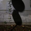 Photos: 葉の影
