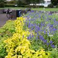 Photos: 公園の花壇