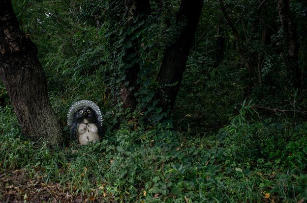 Photos: 森のたぬさん