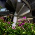 花と螺旋階段