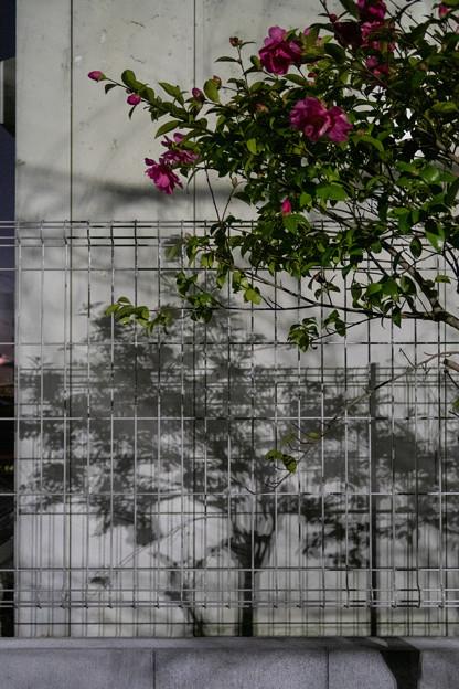 Photos: 花とフェンスと影