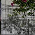 花とフェンスと影