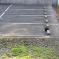 Photos: 駐車場のネコ