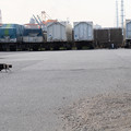 Photos: コンテナヤードのネコ その1