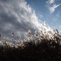 Photos: 風に揺れる