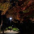Photos: 夜の散歩道