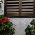 Photos: 窓辺に咲く