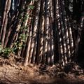 Photos: この竹垣に、、