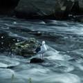 Photos: 二級河川の風景