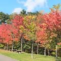 札幌旭山公園紅葉