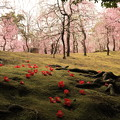 Photos: しだれ梅と椿のコラボ