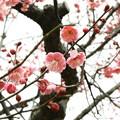 Photos: 19.02_02南公園