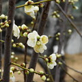 Photos: 19.02_03南公園