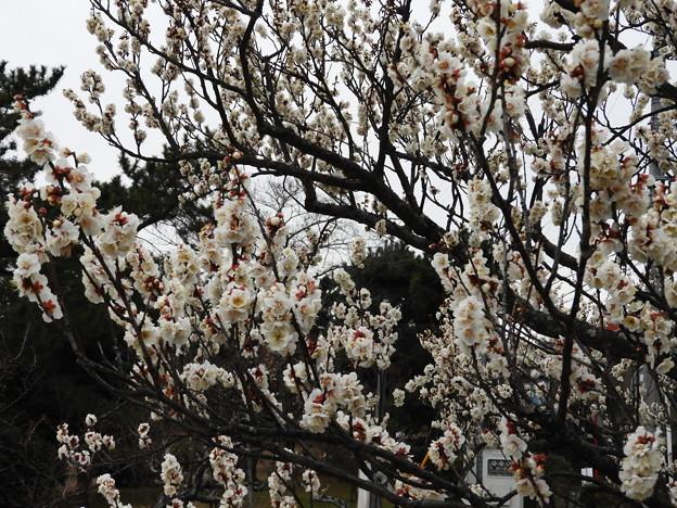Photos: 19.02_04南公園