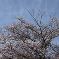 Photos: 20-04_01白鳥神社