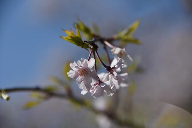 Photos: 20-04_02白鳥神社