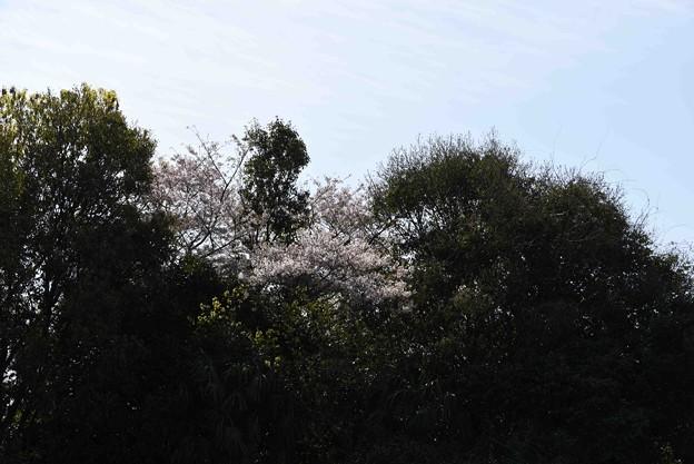 Photos: 20-04_12