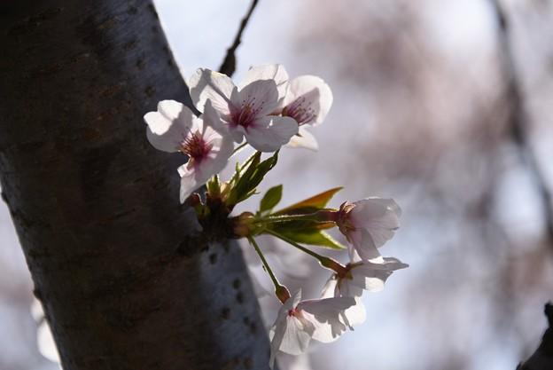 Photos: 20-04_18
