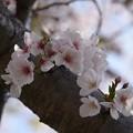 Photos: 20-04_19