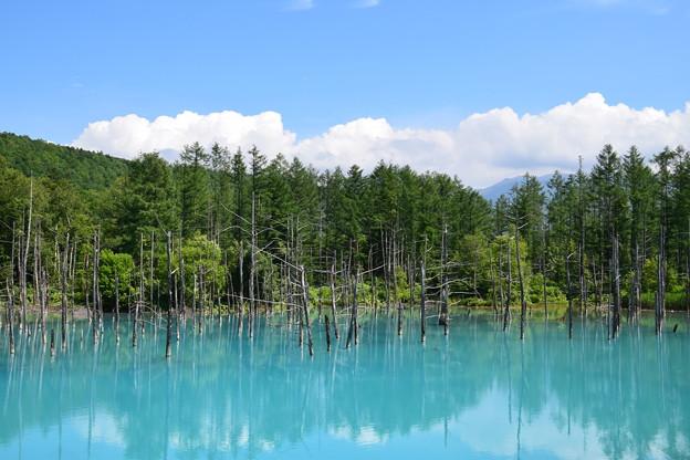 Photos: 美瑛青い池