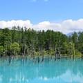 写真: 美瑛青い池