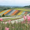 Photos: 四季彩の丘