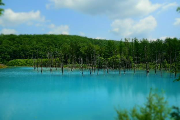 青い池(左側)