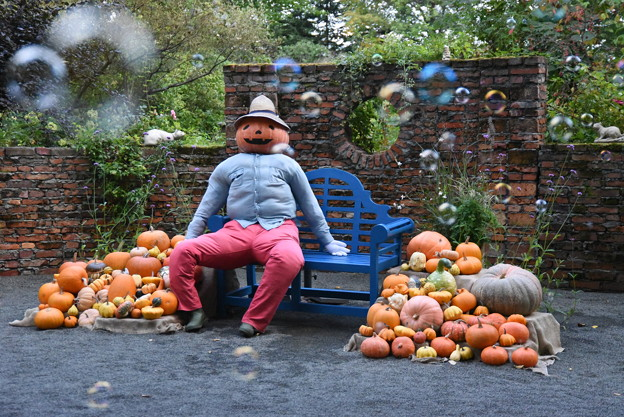 かぼちゃ兄さん