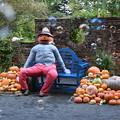 Photos: かぼちゃ兄さん