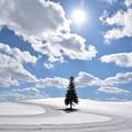 Photos: クリスマスツリーの木