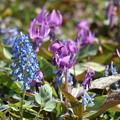 Photos: 春の訪れ