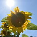 太陽を背に