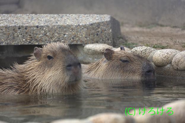 Photos: あったかお風呂。