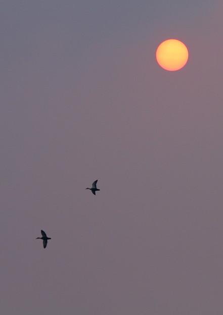 昇陽に鴨の図