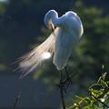 写真: 羽衣