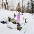 Photos: 名残雪
