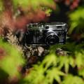 Photos: 春紅葉の中に (キヤノンL2)