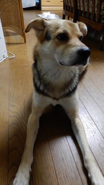 Photos: 7月ワンコ7