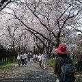 Photos: 赤城千本桜 sachiさん