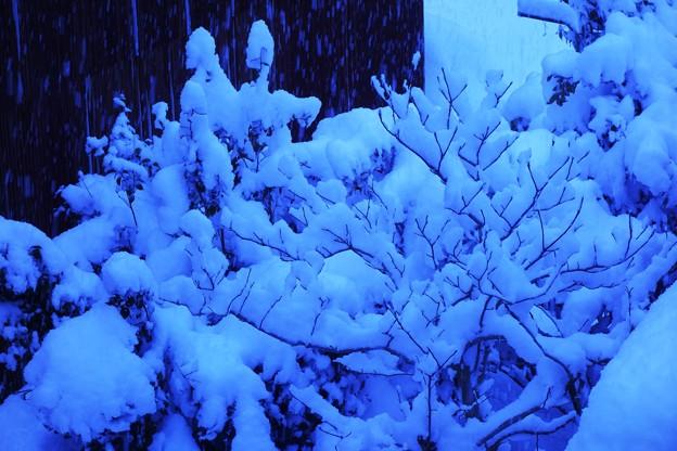 寒い雪の日 DSC09664