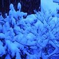 写真: 寒い雪の日 DSC09664