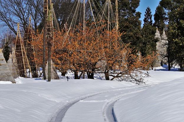 マンサクは満開だが、雪はまだ沢山 IMG_0753