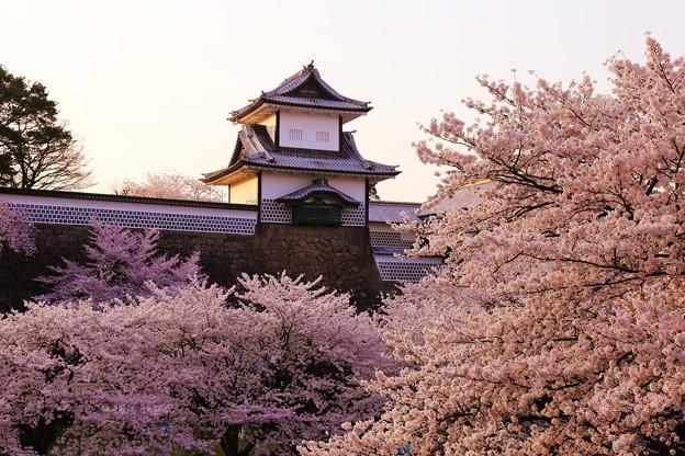 満開の桜と石川門 IMG_3790
